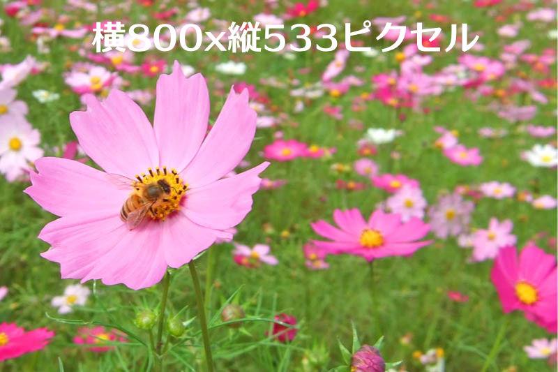 800x533ピクセルの画像